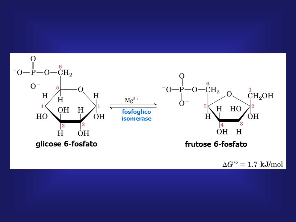 glicose 6-fosfato frutose 6-fosfato