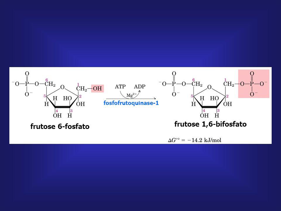 frutose 1,6-bifosfato frutose 6-fosfato