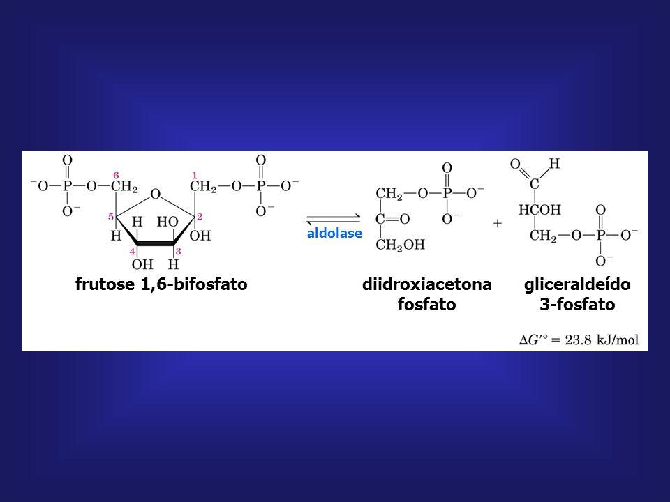 diidroxiacetona fosfato gliceraldeído 3-fosfato