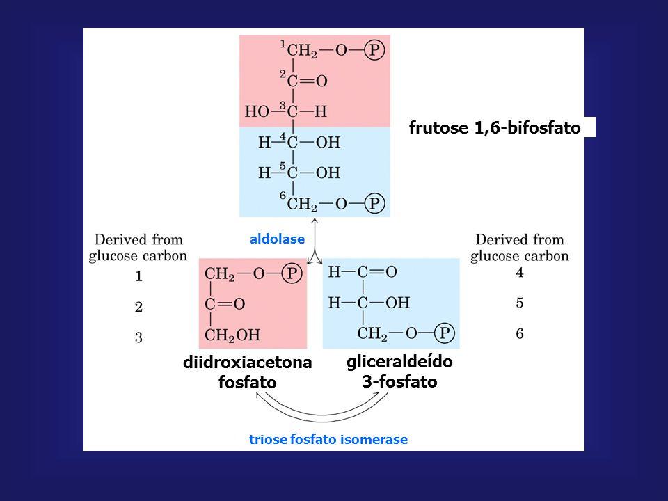 frutose 1,6-bifosfato diidroxiacetona fosfato gliceraldeído 3-fosfato