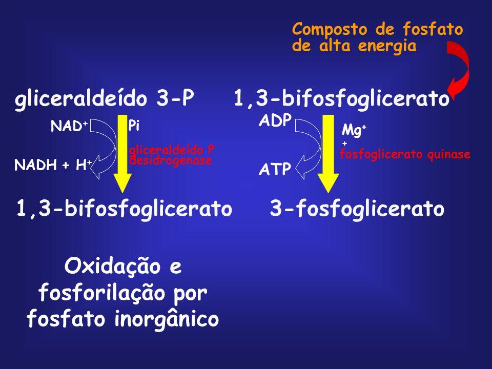 Oxidação e fosforilação por fosfato inorgânico