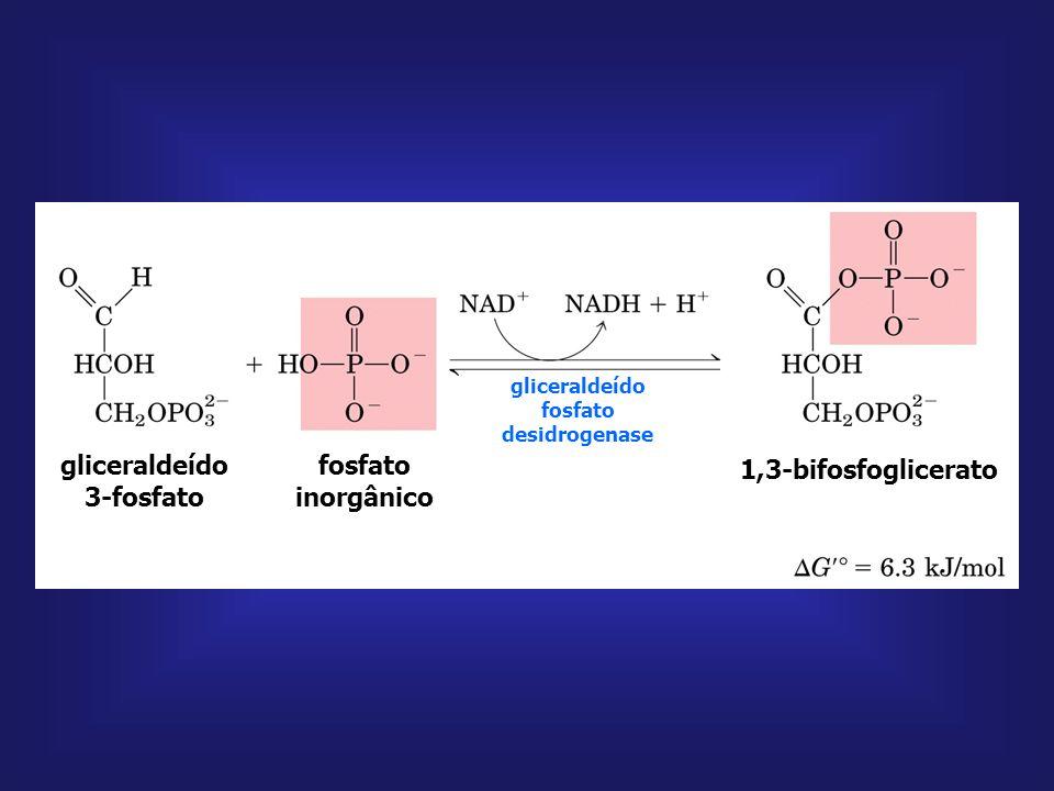 gliceraldeído fosfato desidrogenase gliceraldeído 3-fosfato