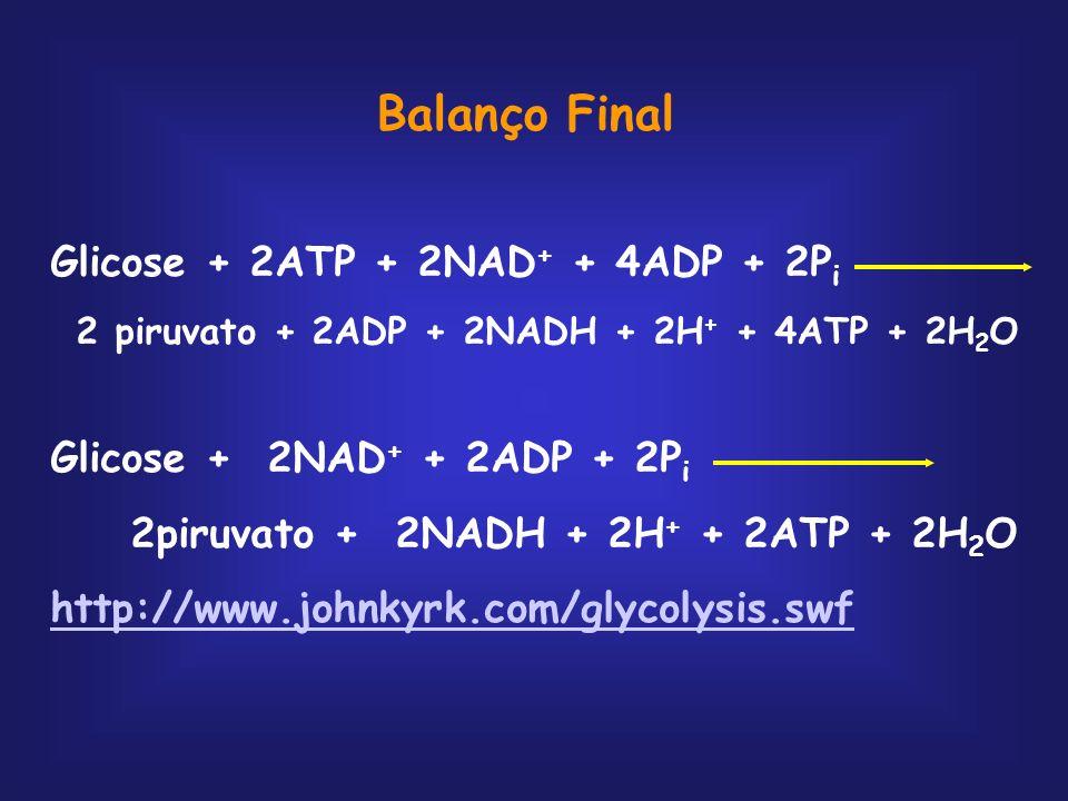 Balanço Final Glicose + 2ATP + 2NAD+ + 4ADP + 2Pi