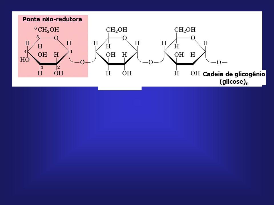 Cadeia de glicogênio (glicose)n
