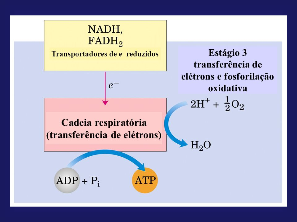 Cadeia respiratória (transferência de elétrons)