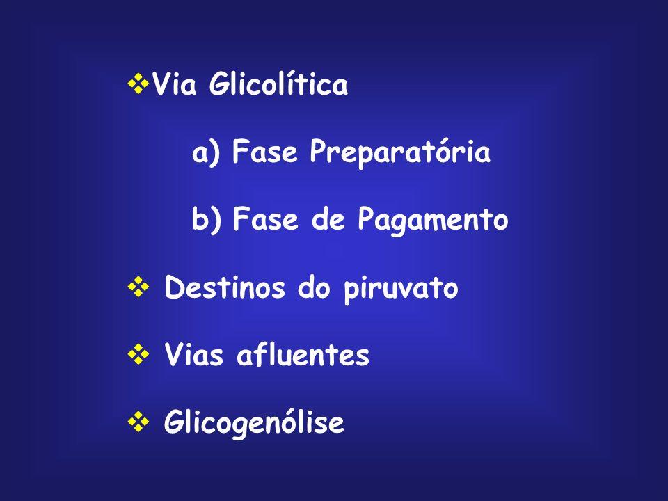 Via Glicolítica a) Fase Preparatória. b) Fase de Pagamento. Destinos do piruvato. Vias afluentes.