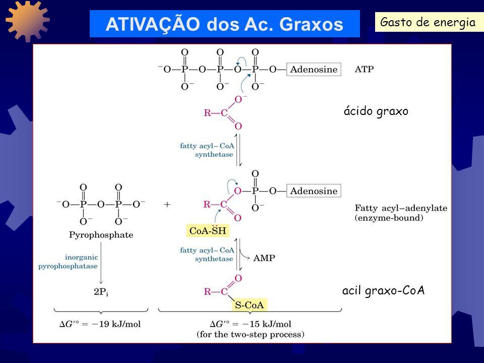 ATIVAÇÃO dos Ac. Graxos Gasto de energia ácido graxo acil graxo-CoA