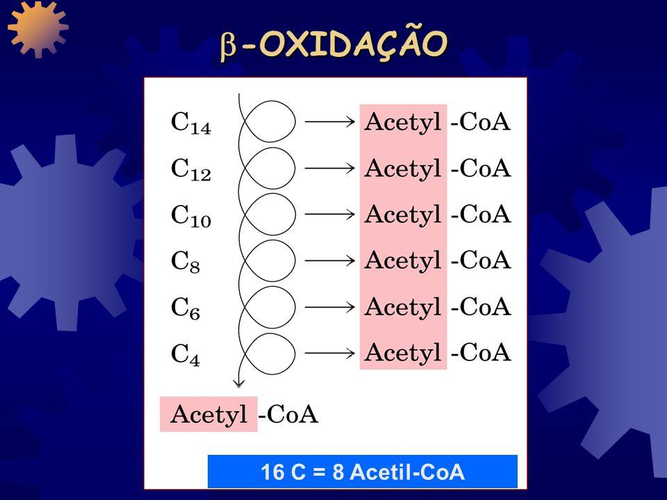 -OXIDAÇÃO 16 C = 8 Acetil-CoA