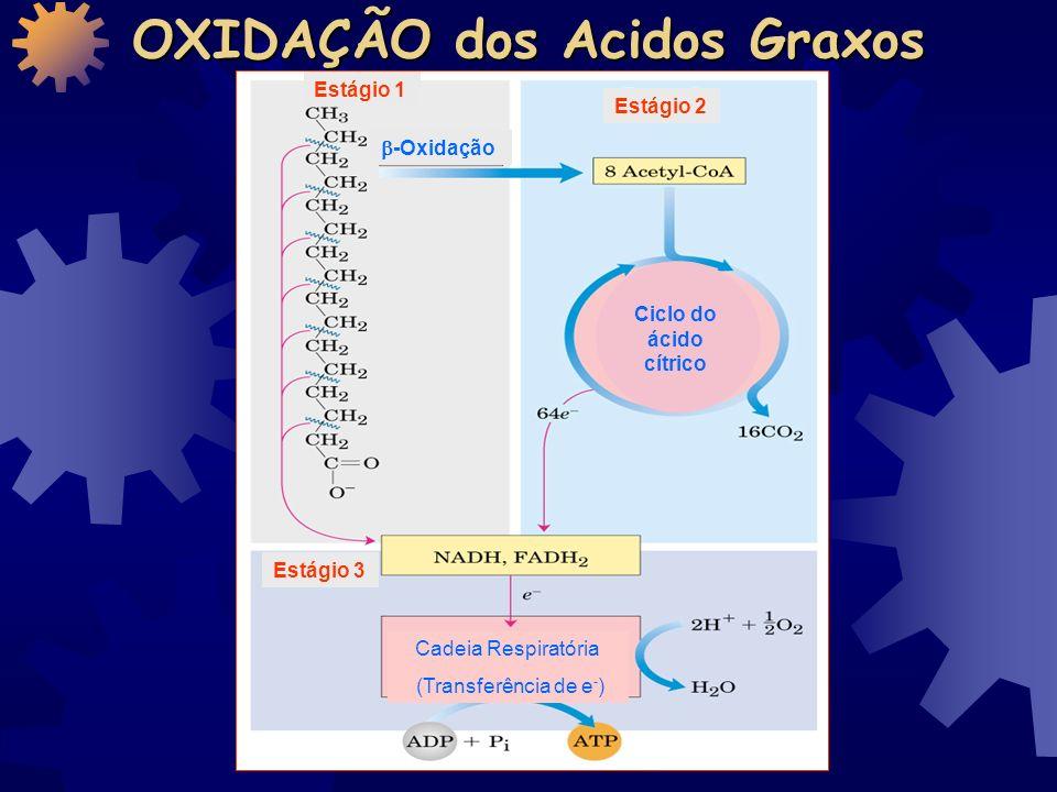 OXIDAÇÃO dos Acidos Graxos