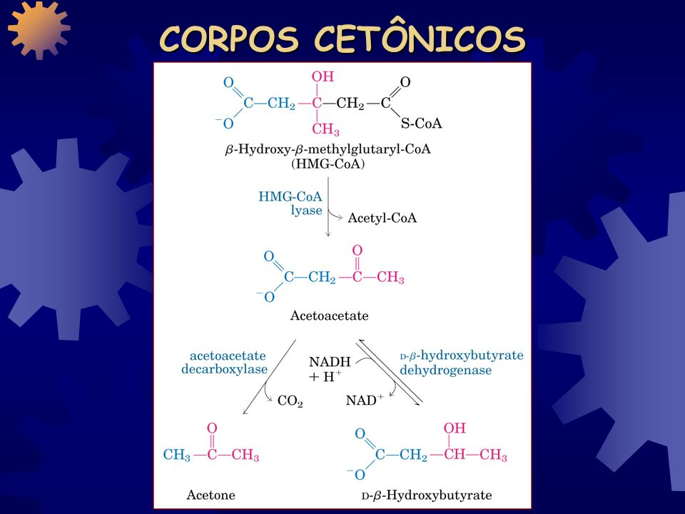 CORPOS CETÔNICOS