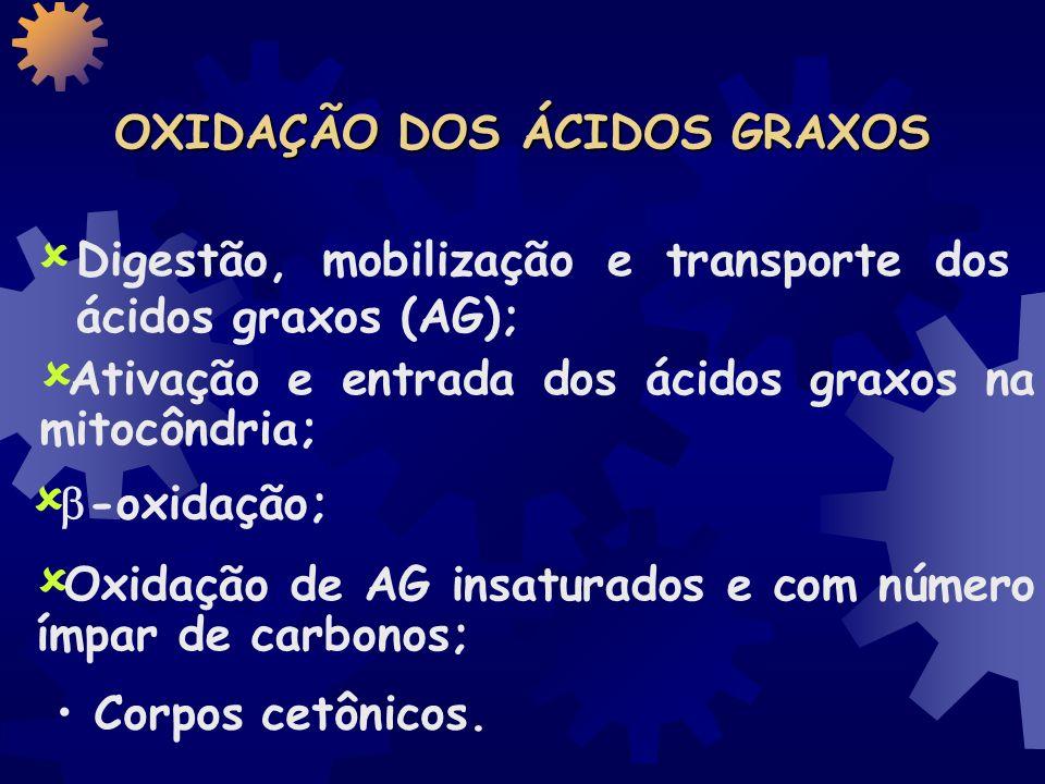 OXIDAÇÃO DOS ÁCIDOS GRAXOS