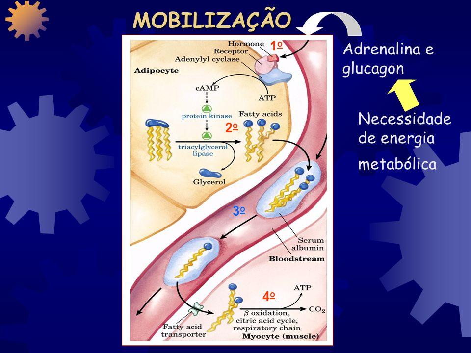 Necessidade de energia metabólica