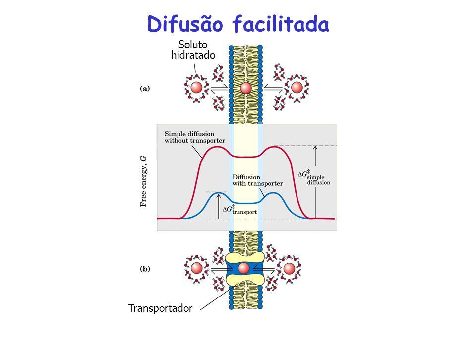 Difusão facilitada Soluto hidratado Transportador