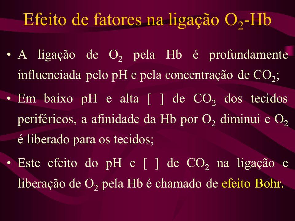 Efeito de fatores na ligação O2-Hb