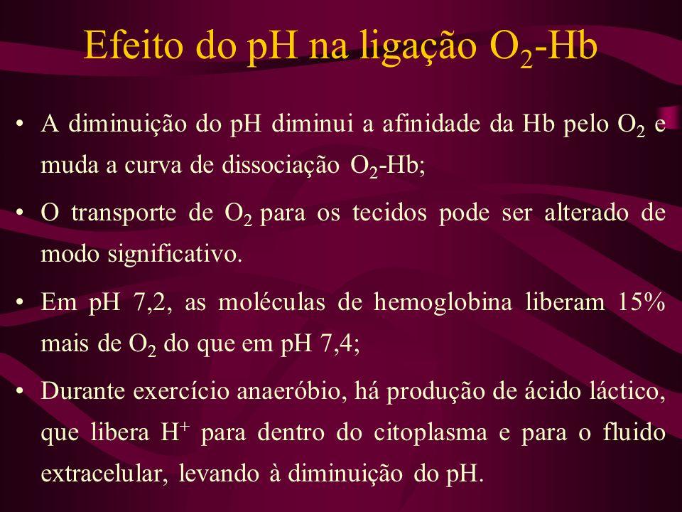 Efeito do pH na ligação O2-Hb