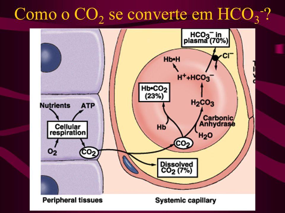 Como o CO2 se converte em HCO3-