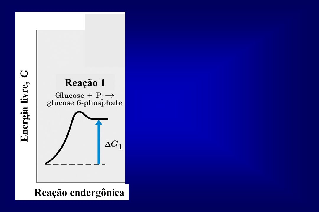 Reação 1 Energia livre, G Reação endergônica