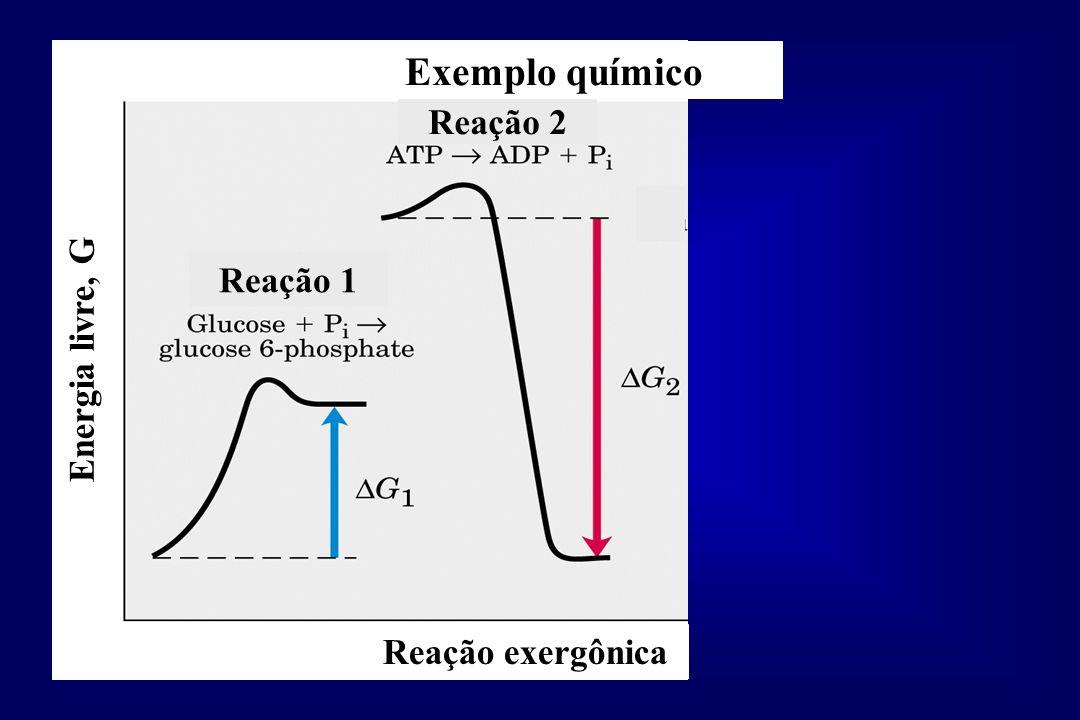 Exemplo químico Reação 2 Reação 1 Energia livre, G Reação exergônica