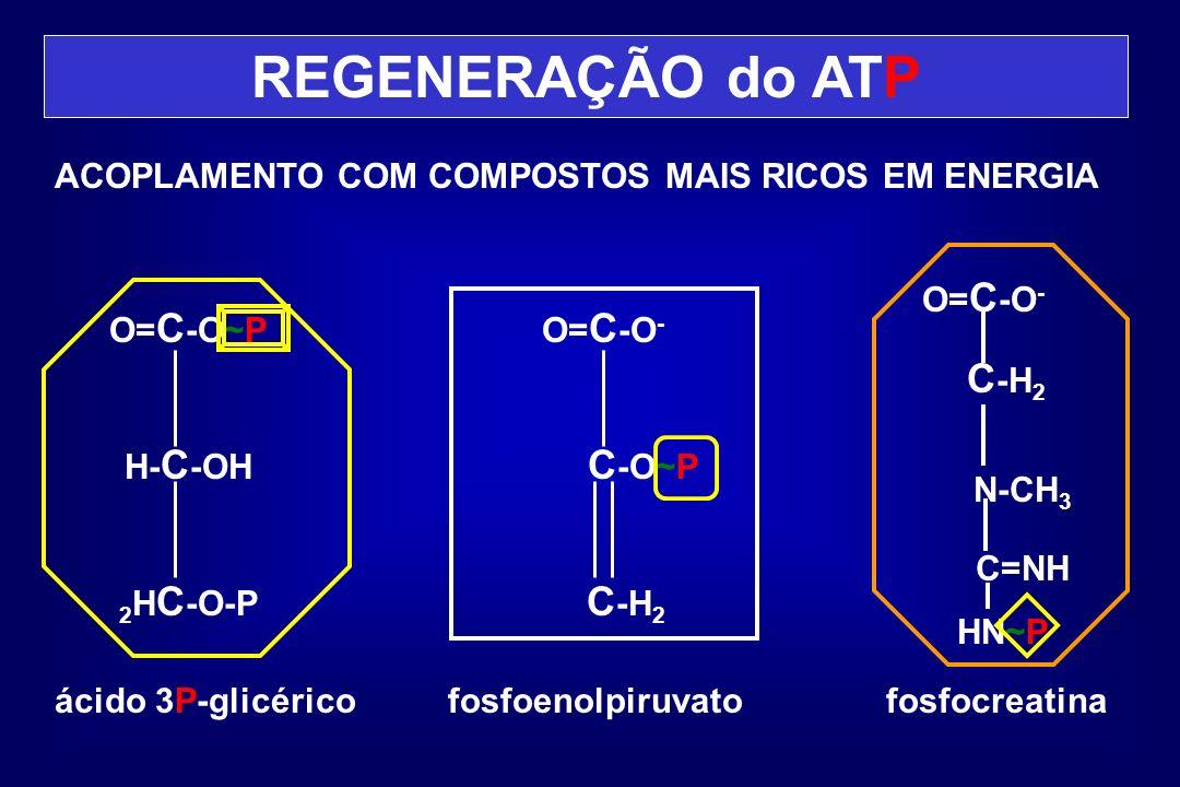 REGENERAÇÃO do ATP C-H2 C-O~P C-H2