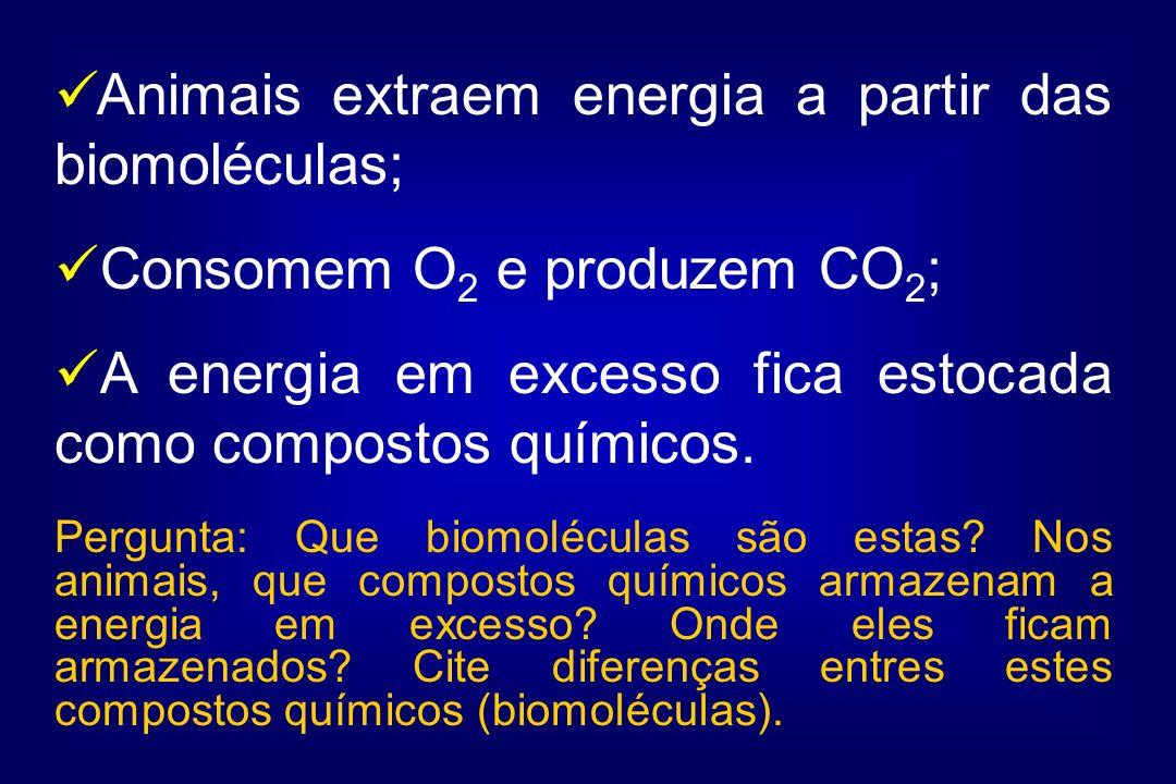 Animais extraem energia a partir das biomoléculas;