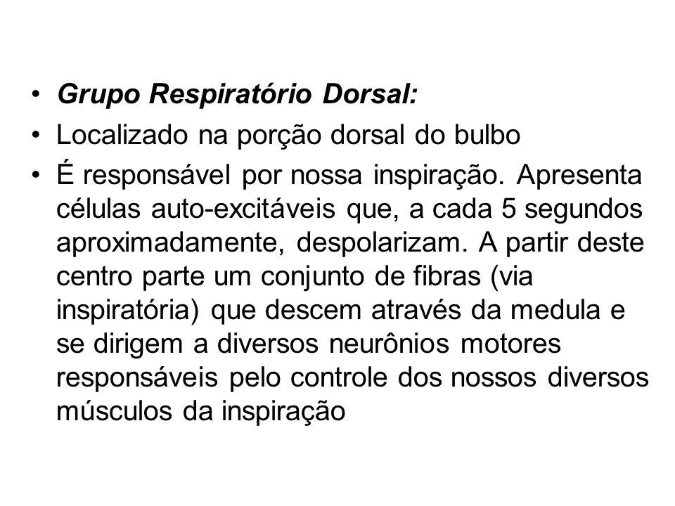 Grupo Respiratório Dorsal: