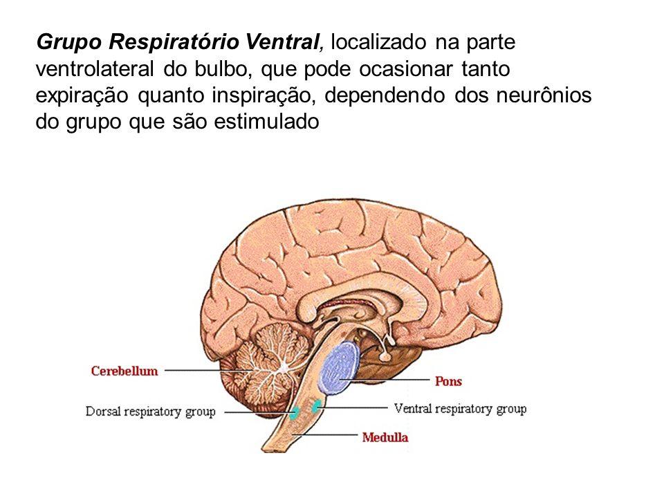 Grupo Respiratório Ventral, localizado na parte ventrolateral do bulbo, que pode ocasionar tanto expiração quanto inspiração, dependendo dos neurônios do grupo que são estimulado