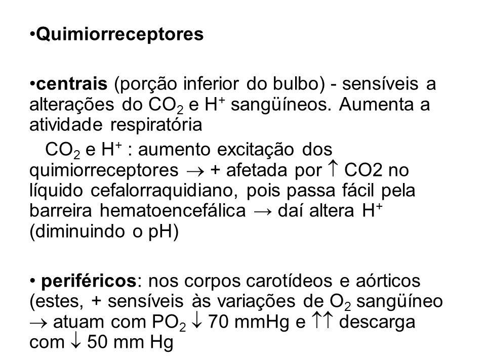 Quimiorreceptores centrais (porção inferior do bulbo) - sensíveis a alterações do CO2 e H+ sangüíneos. Aumenta a atividade respiratória.