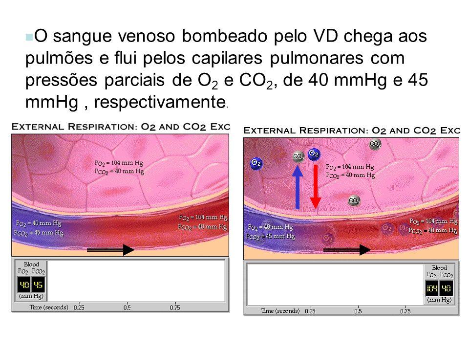 O sangue venoso bombeado pelo VD chega aos pulmões e flui pelos capilares pulmonares com pressões parciais de O2 e CO2, de 40 mmHg e 45 mmHg , respectivamente.