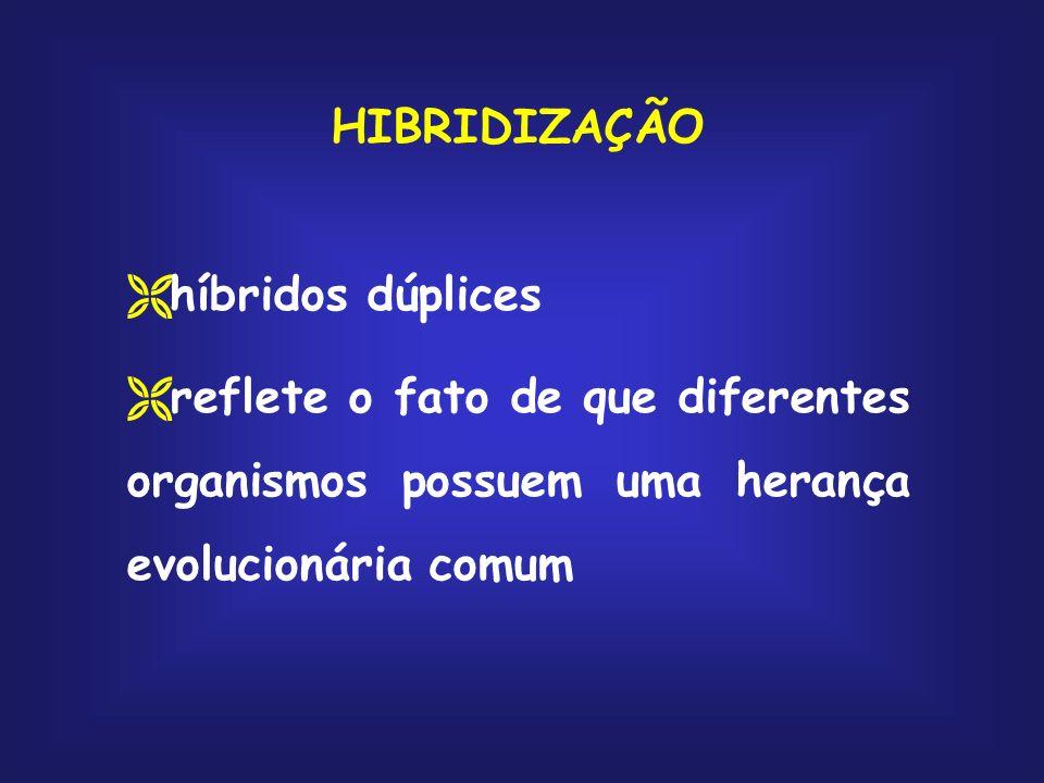HIBRIDIZAÇÃO híbridos dúplices.