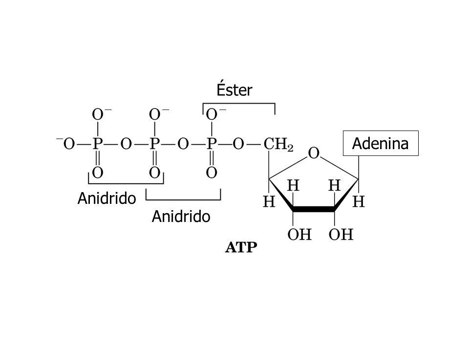 Éster Adenina Anidrido Anidrido