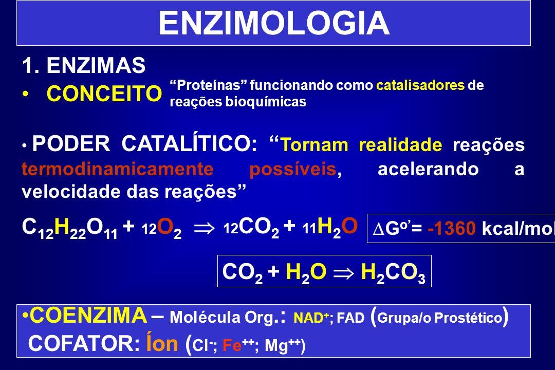 ENZIMOLOGIA ENZIMAS CONCEITO C12H22O11 + 12O2  CO2 + H2O  H2CO3