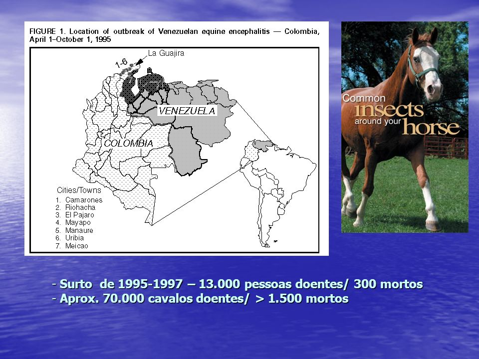 Surto de 1995-1997 – 13.000 pessoas doentes/ 300 mortos