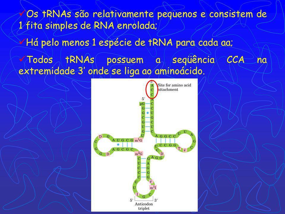 Os tRNAs são relativamente pequenos e consistem de 1 fita simples de RNA enrolada;