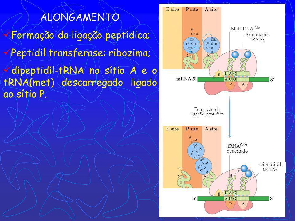 Formação da ligação peptídica