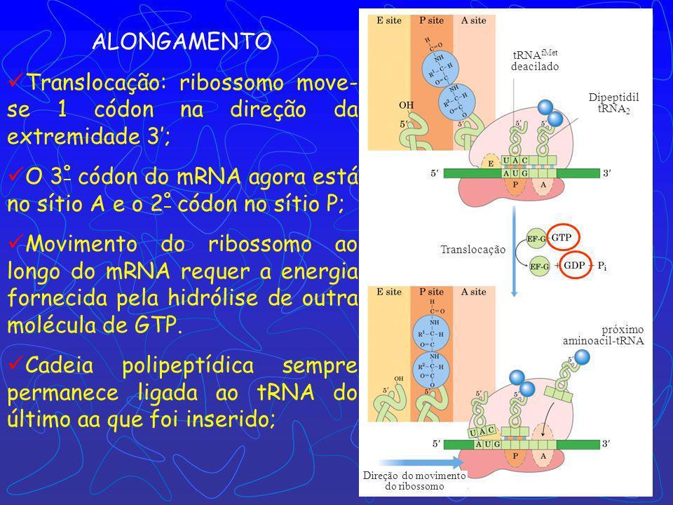 Direção do movimento do ribossomo