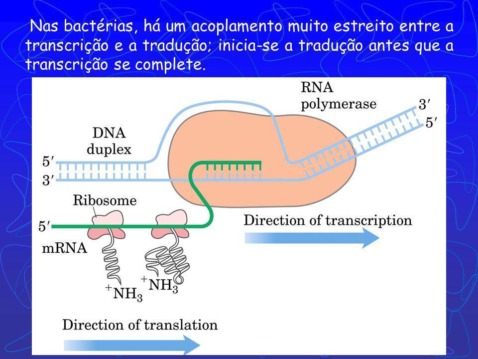Nas bactérias, há um acoplamento muito estreito entre a transcrição e a tradução; inicia-se a tradução antes que a transcrição se complete.