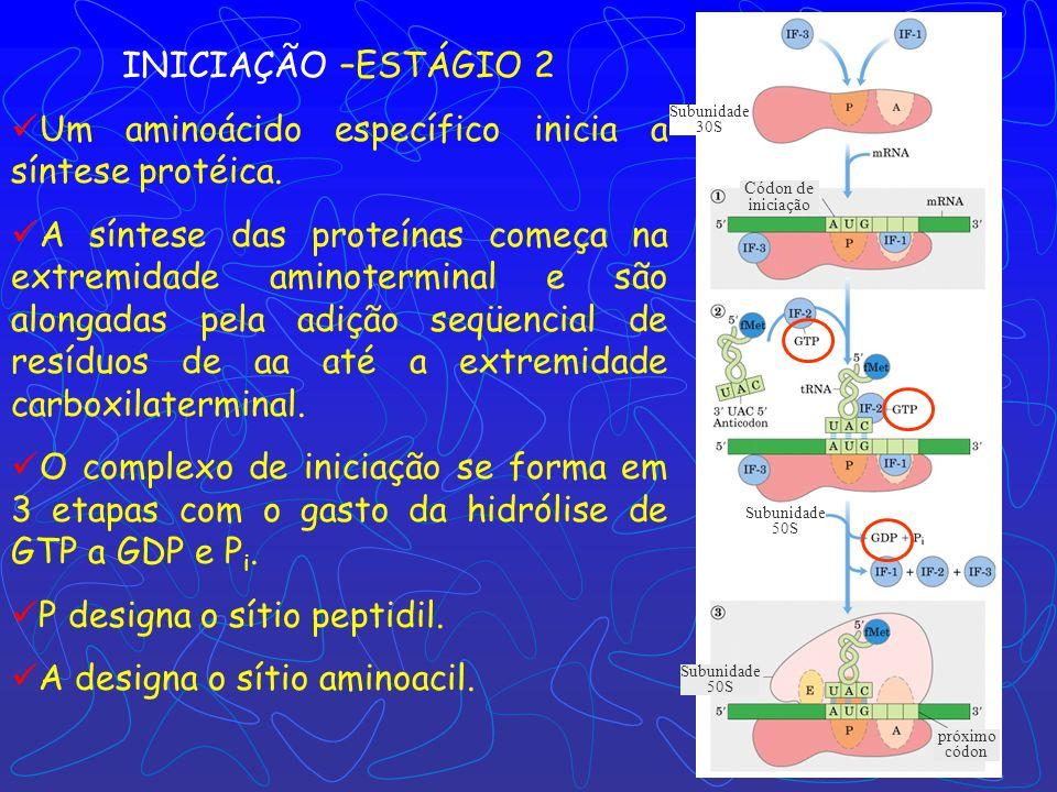 Um aminoácido específico inicia a síntese protéica.