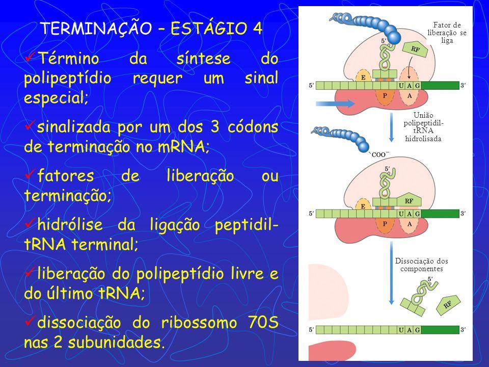 Término da síntese do polipeptídio requer um sinal especial;
