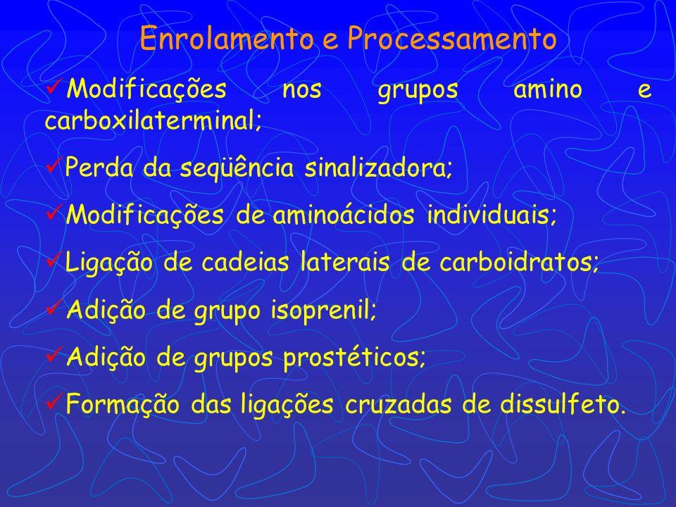 Enrolamento e Processamento