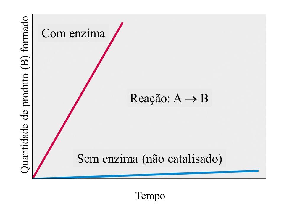 Sem enzima (não catalisado)