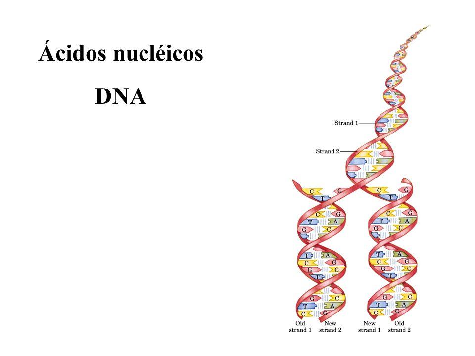 Ácidos nucléicos DNA