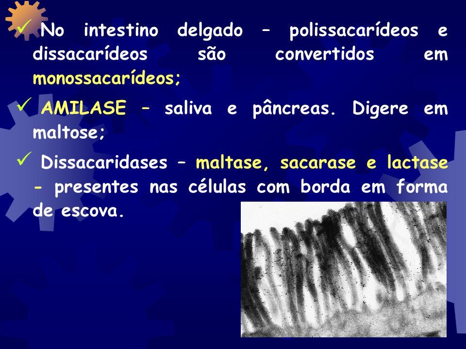 No intestino delgado – polissacarídeos e dissacarídeos são convertidos em monossacarídeos;