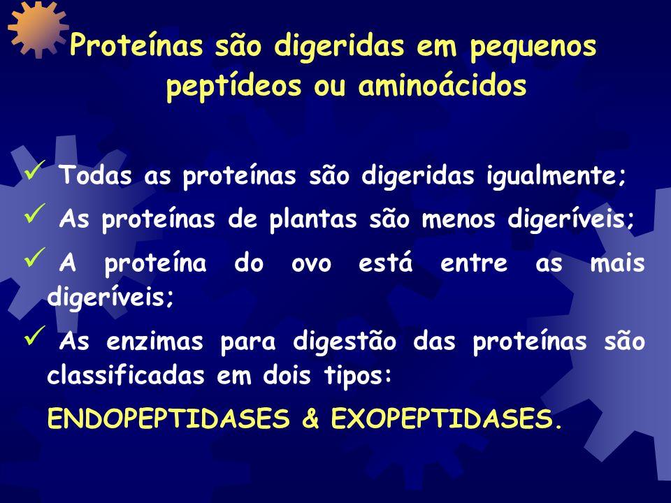 Proteínas são digeridas em pequenos peptídeos ou aminoácidos