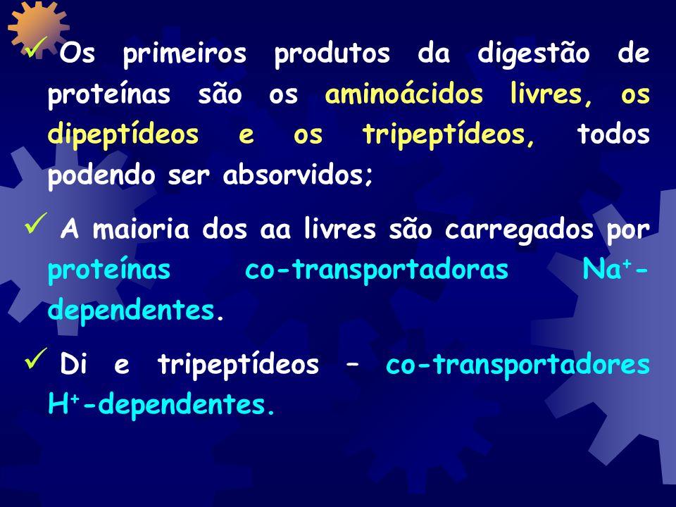 Os primeiros produtos da digestão de proteínas são os aminoácidos livres, os dipeptídeos e os tripeptídeos, todos podendo ser absorvidos;