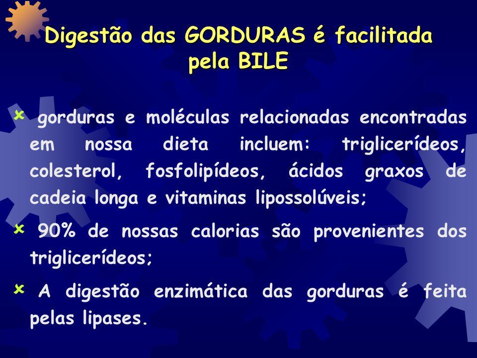 Digestão das GORDURAS é facilitada pela BILE