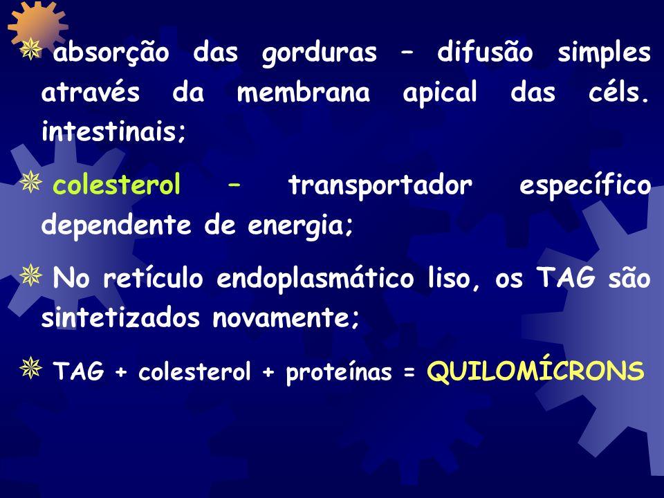 absorção das gorduras – difusão simples através da membrana apical das céls. intestinais;