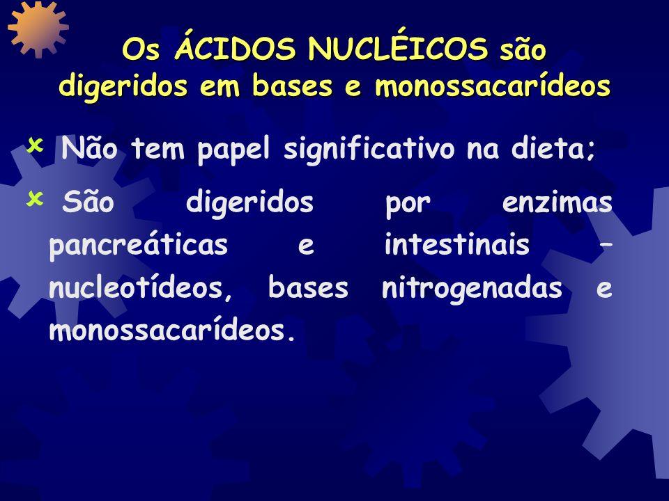 Os ÁCIDOS NUCLÉICOS são digeridos em bases e monossacarídeos