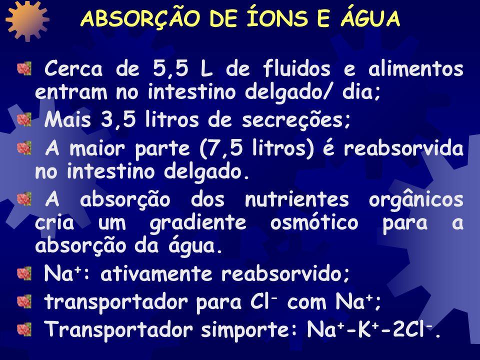 ABSORÇÃO DE ÍONS E ÁGUA Cerca de 5,5 L de fluidos e alimentos entram no intestino delgado/ dia; Mais 3,5 litros de secreções;