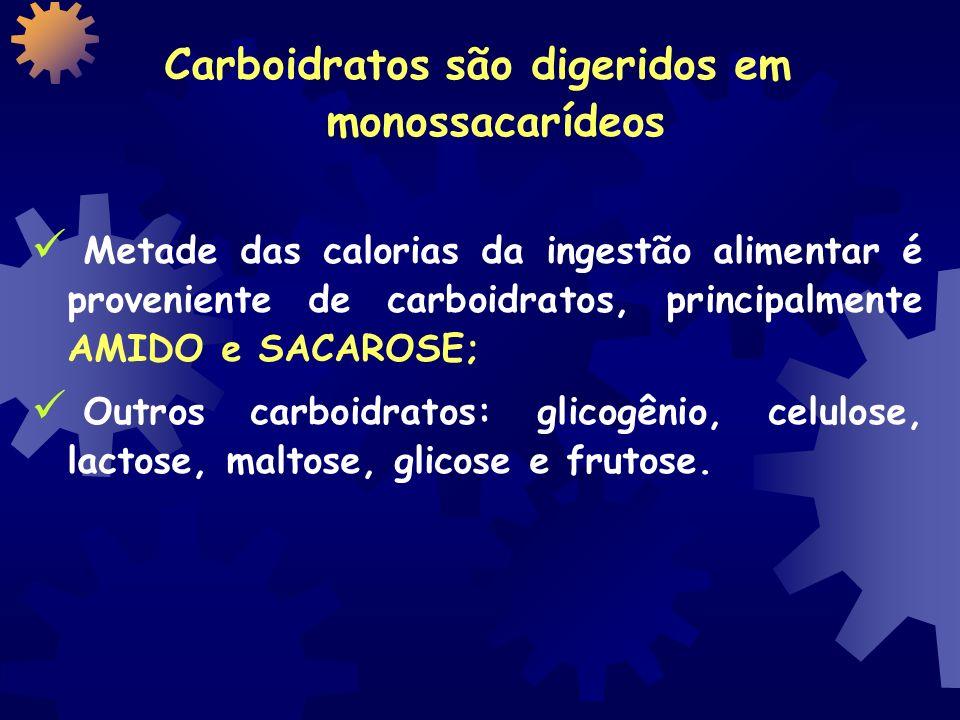 Carboidratos são digeridos em monossacarídeos