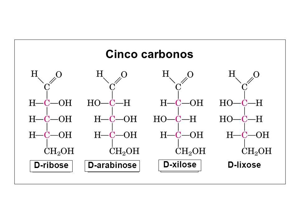 Cinco carbonos D-ribose D-arabinose D-xilose D-lixose